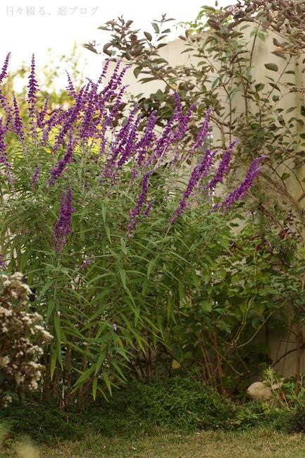 f:id:m-garden-life:20171008163739j:plain