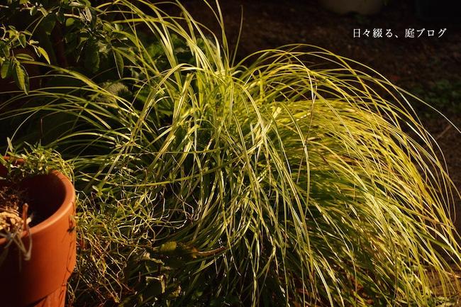 f:id:m-garden-life:20171008173656j:plain
