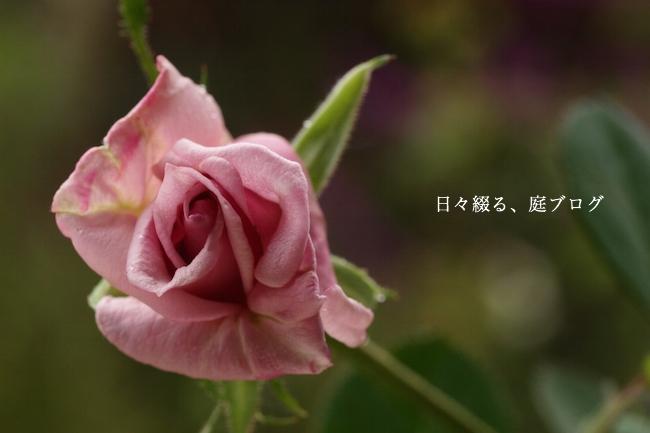 f:id:m-garden-life:20171015081124j:plain