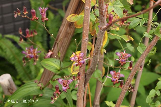 f:id:m-garden-life:20171015083228j:plain