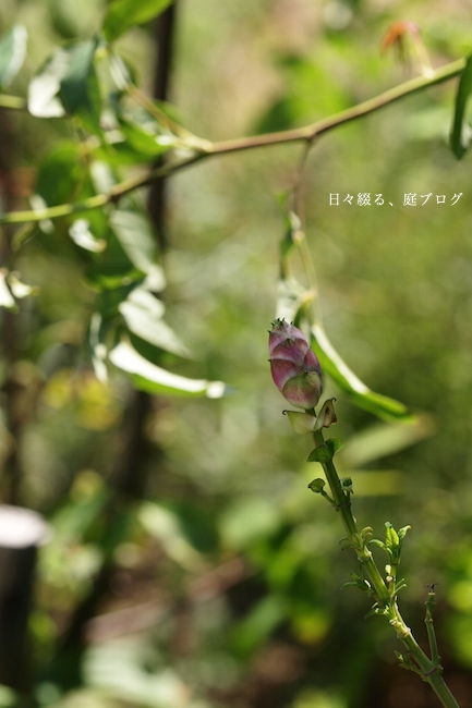 f:id:m-garden-life:20171015085548j:plain