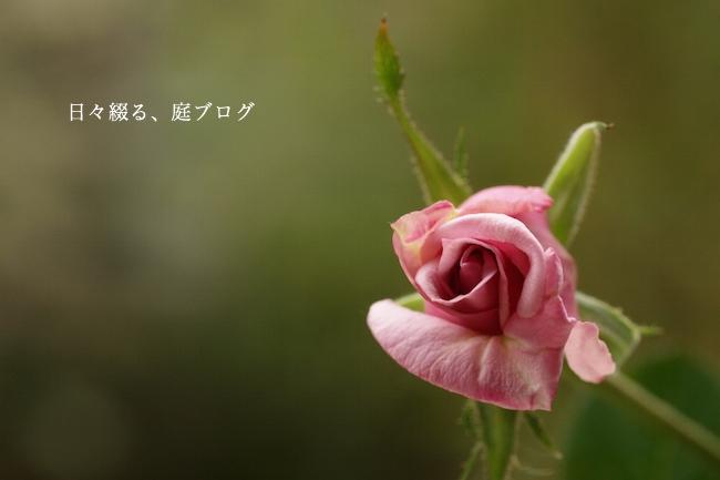 f:id:m-garden-life:20171016204213j:plain