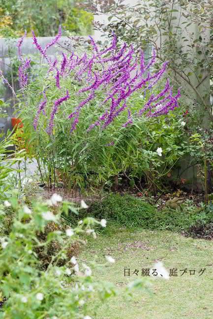 f:id:m-garden-life:20171019152254j:plain