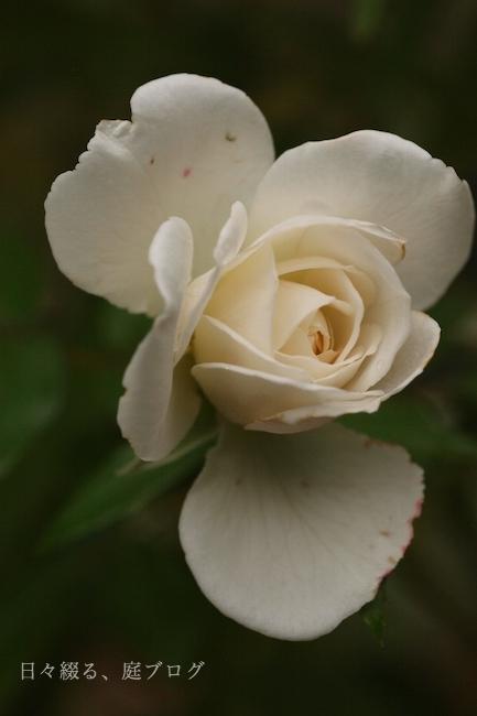 f:id:m-garden-life:20171019152605j:plain