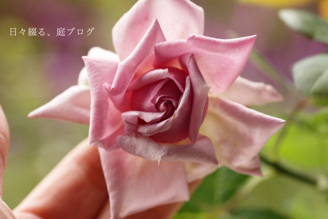 f:id:m-garden-life:20171019153600j:plain