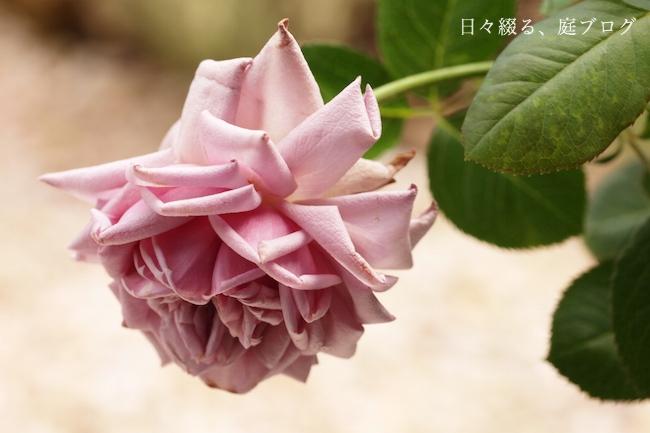 f:id:m-garden-life:20171023140527j:plain