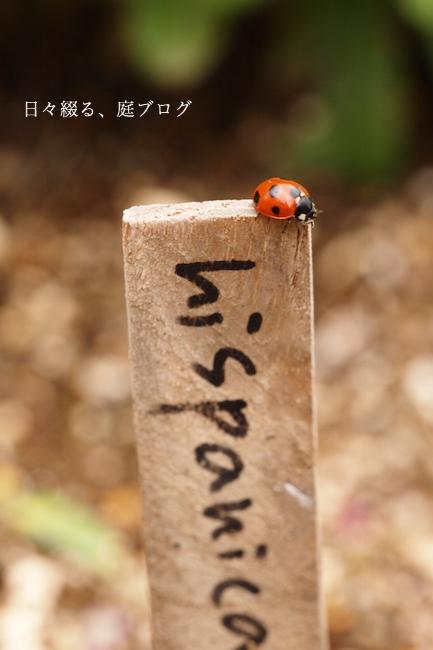 f:id:m-garden-life:20171025151137j:plain