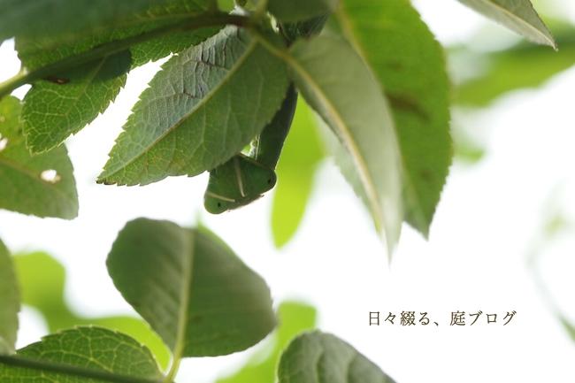 f:id:m-garden-life:20171027163121j:plain