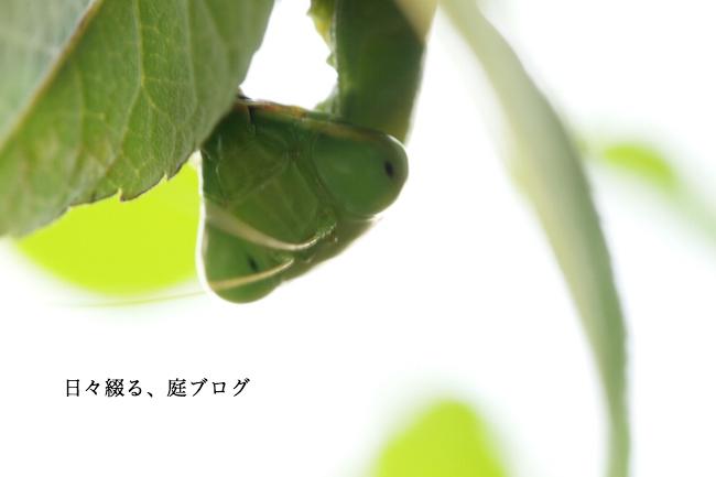 f:id:m-garden-life:20171027163311j:plain