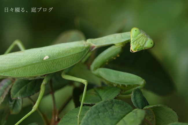 f:id:m-garden-life:20171027163922j:plain