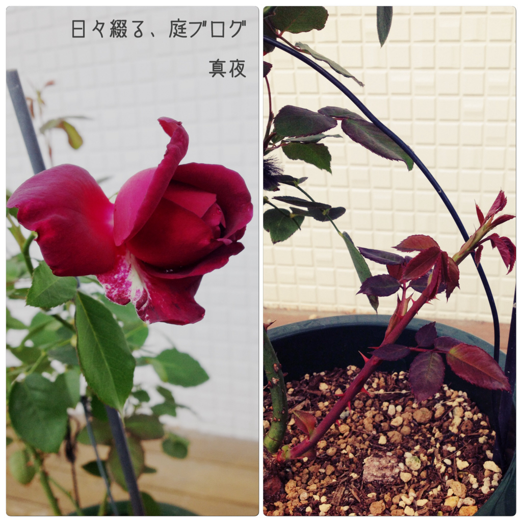 f:id:m-garden-life:20171030115203j:plain