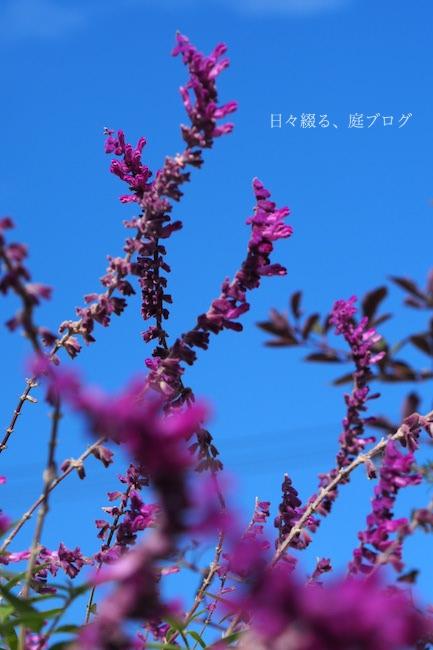f:id:m-garden-life:20171103123930j:plain