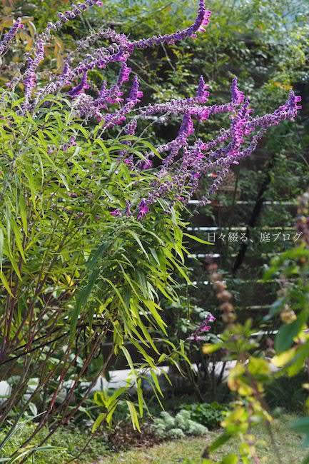 f:id:m-garden-life:20171103123958j:plain