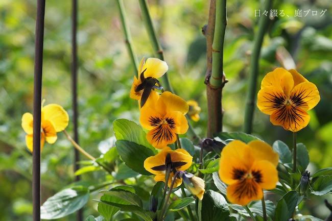 f:id:m-garden-life:20171103124101j:plain