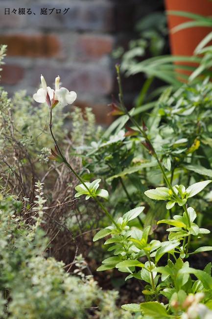 f:id:m-garden-life:20171103124605j:plain