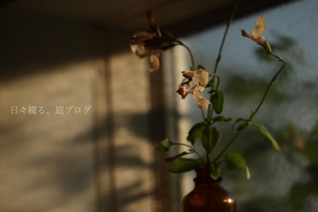 f:id:m-garden-life:20171105081451j:plain