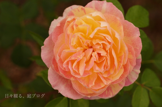 f:id:m-garden-life:20171107162951j:plain