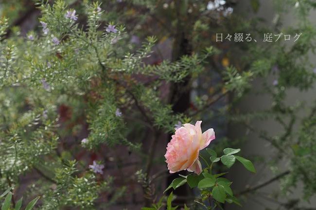 f:id:m-garden-life:20171109172913j:plain