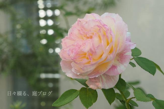 f:id:m-garden-life:20171113151456j:plain