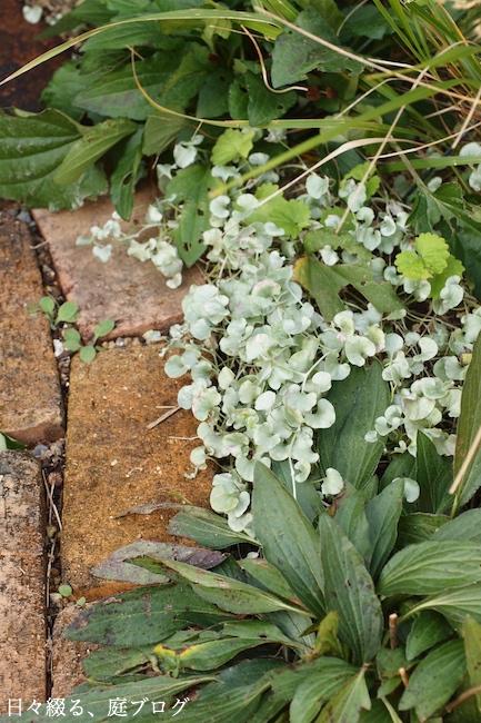 f:id:m-garden-life:20171113164912j:plain