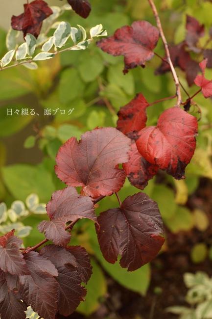 f:id:m-garden-life:20171118142543j:plain