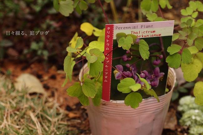 f:id:m-garden-life:20171118142903j:plain