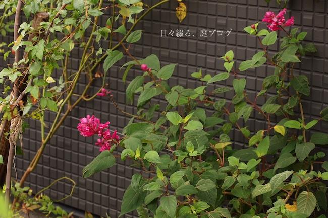 f:id:m-garden-life:20171118182244j:plain