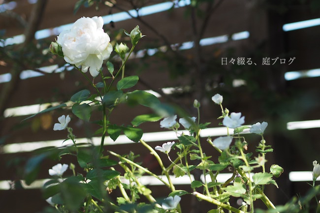 f:id:m-garden-life:20171121122137j:plain