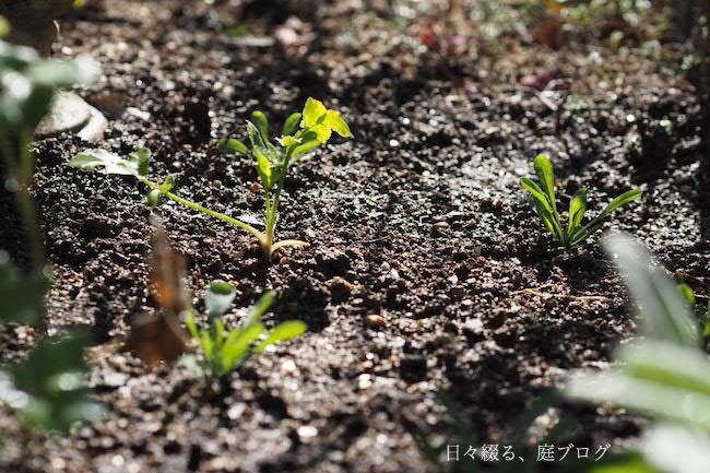 f:id:m-garden-life:20171121122205j:plain