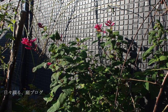 f:id:m-garden-life:20171210102515j:plain