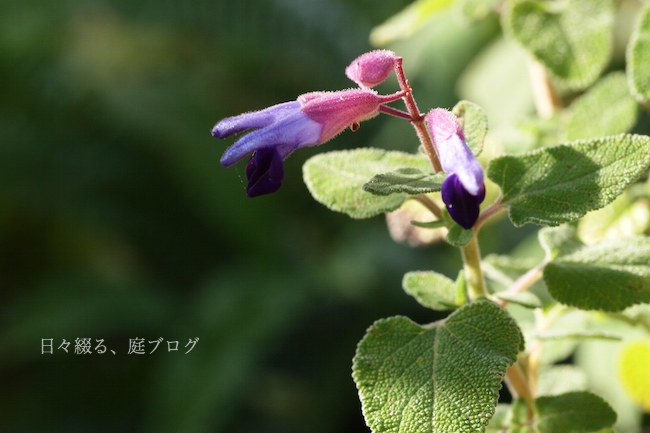 f:id:m-garden-life:20171210102643j:plain