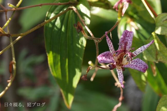 f:id:m-garden-life:20171210103522j:plain