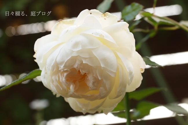 f:id:m-garden-life:20171212075550j:plain
