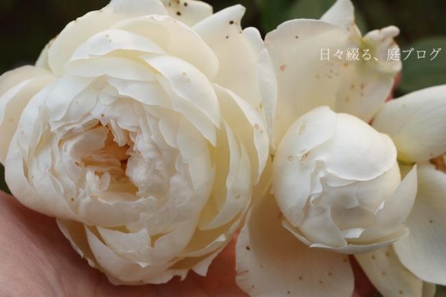 f:id:m-garden-life:20171212075852j:plain