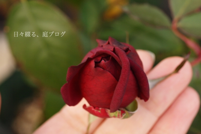 f:id:m-garden-life:20171212080145j:plain