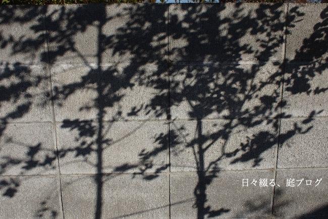 f:id:m-garden-life:20171215111929j:plain