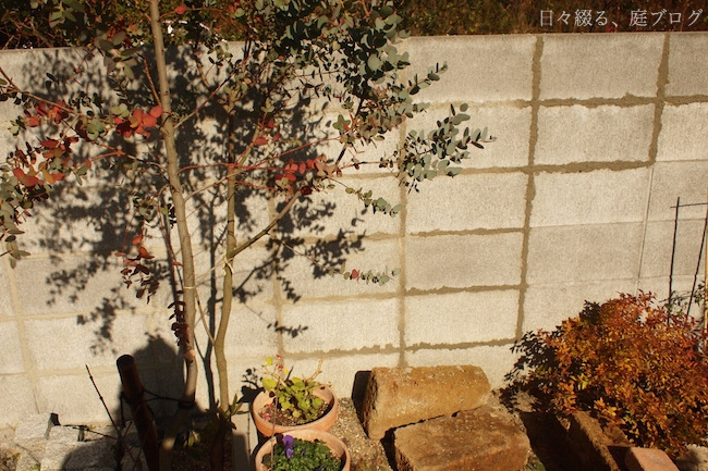 f:id:m-garden-life:20171217190654j:plain