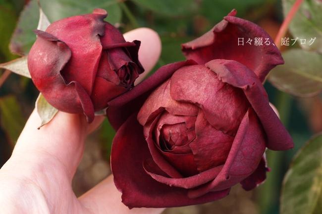 f:id:m-garden-life:20171219163131j:plain