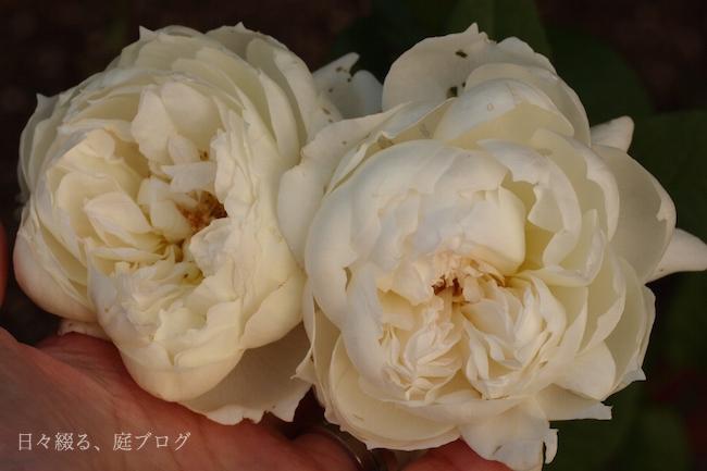 f:id:m-garden-life:20171219163318j:plain