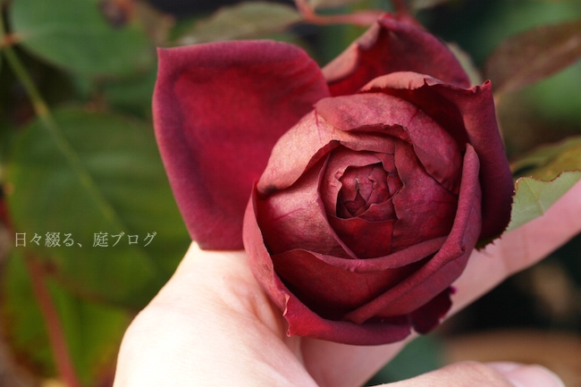 f:id:m-garden-life:20171219163553j:plain