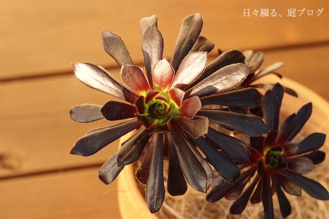 f:id:m-garden-life:20180102162239j:plain
