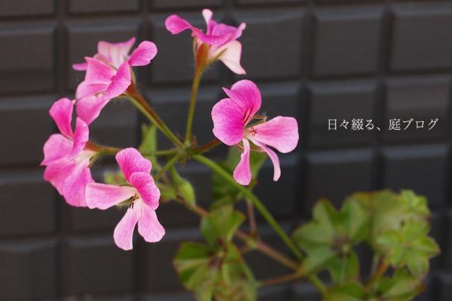 f:id:m-garden-life:20180102163548j:plain