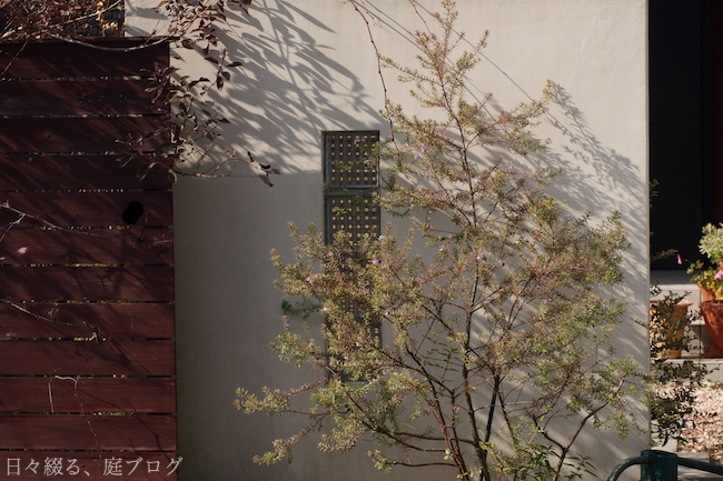 f:id:m-garden-life:20180106134524j:plain