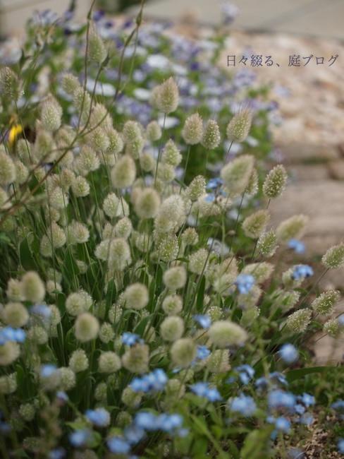 f:id:m-garden-life:20180106141432j:plain