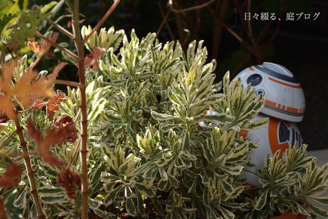 f:id:m-garden-life:20180109141610j:plain