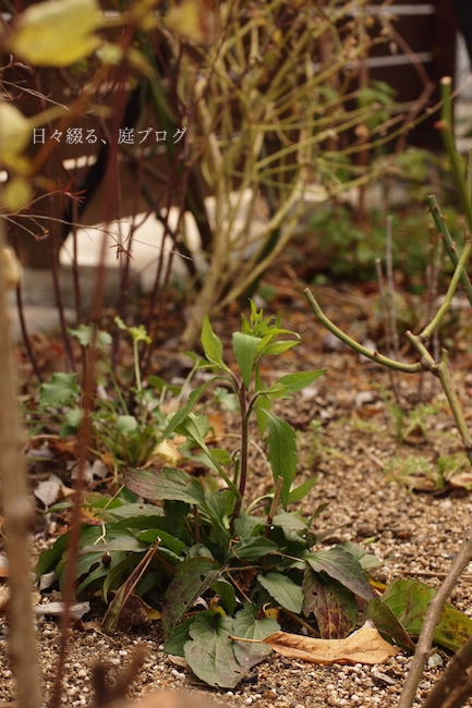 f:id:m-garden-life:20180111140950j:plain