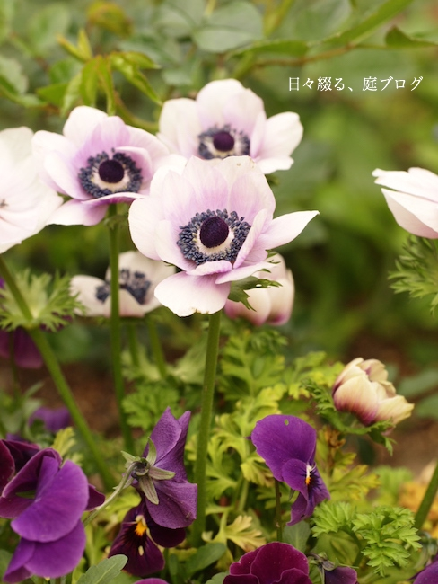 f:id:m-garden-life:20180115163824j:plain
