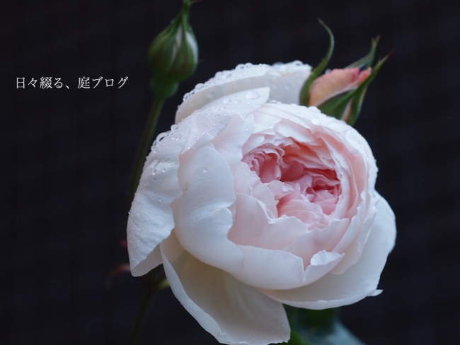 f:id:m-garden-life:20180115170401j:plain