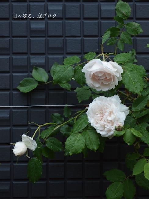 f:id:m-garden-life:20180117162227j:plain