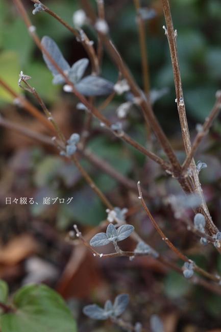 f:id:m-garden-life:20180118170411j:plain